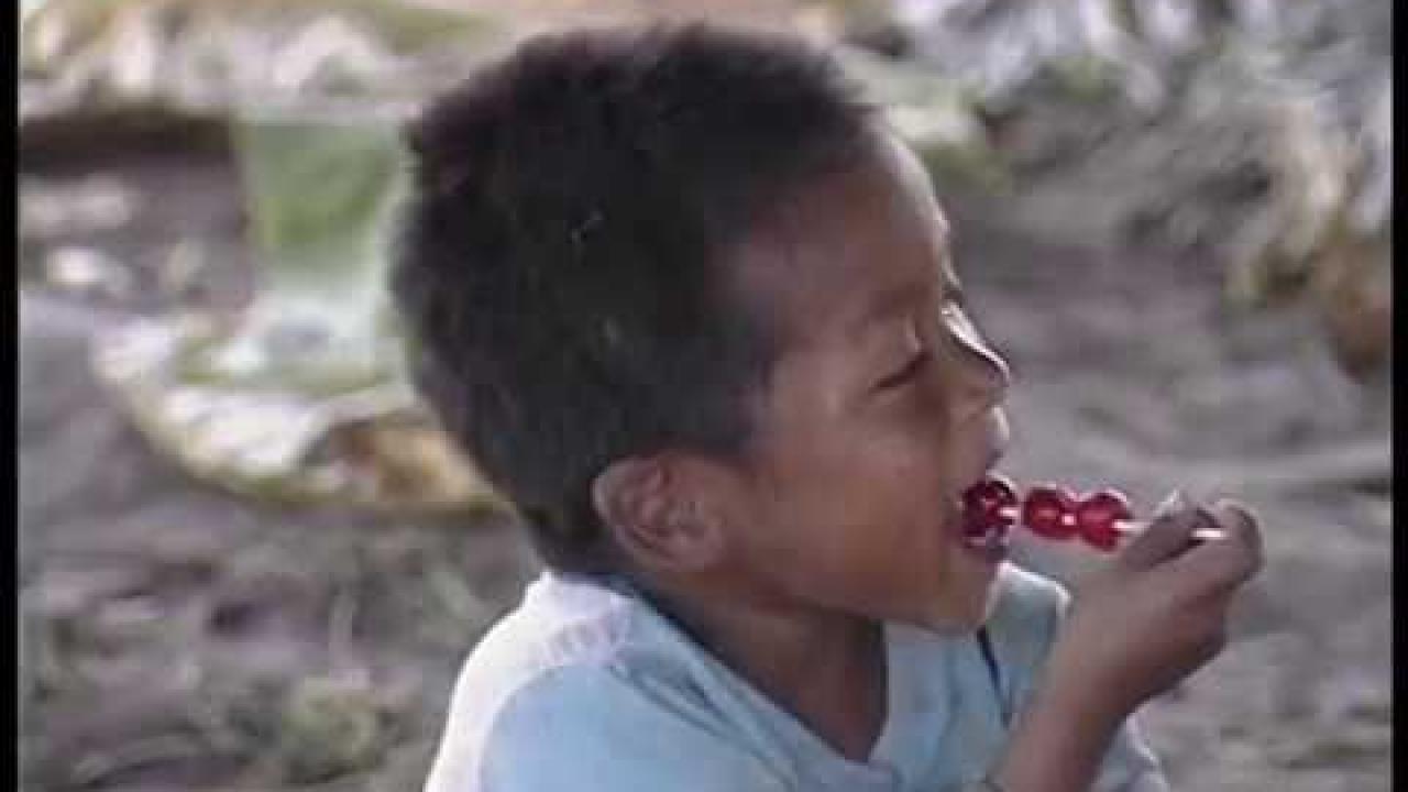 Huicholes y Plaguicidas (Espanol, 1994)