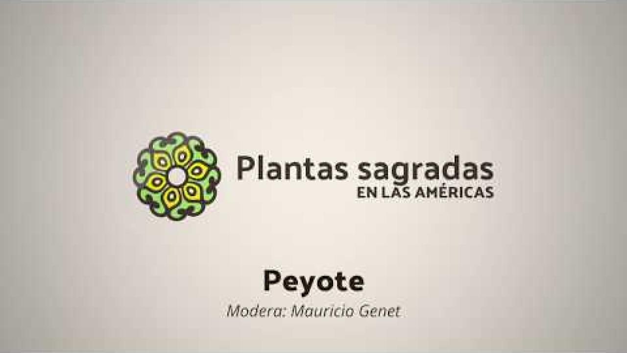 Politics and Conservation Around Peyote | Plantas Sagradas en las Américas