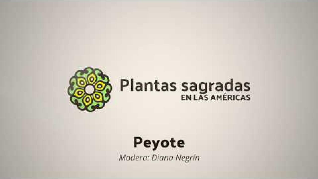 Peyote: Territory, Roots and Conflict | Plantas Sagradas en las Américas