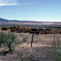 Clandistime Sawmill, 1981 - Photograph ©Juan Negrín 1981